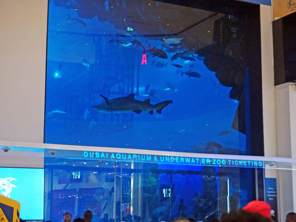 Dubai - Aquário no Dubai Mall