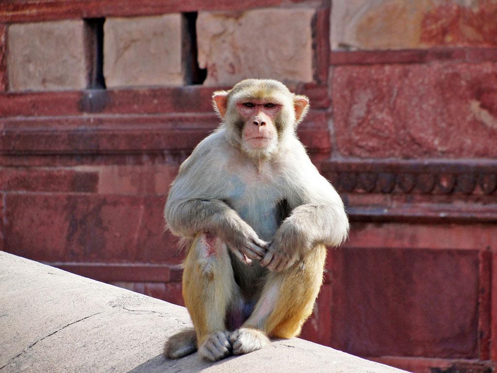 Índia - Agra